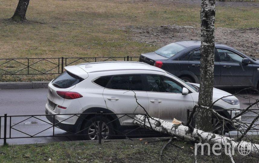 Позже упало дерево во дворе дома по Рихарда Зорге, 7. Фото spb_today, vk.com