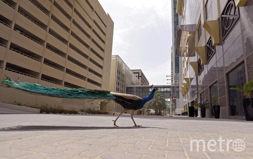 Дубай, ОАЭ. Фото AFP