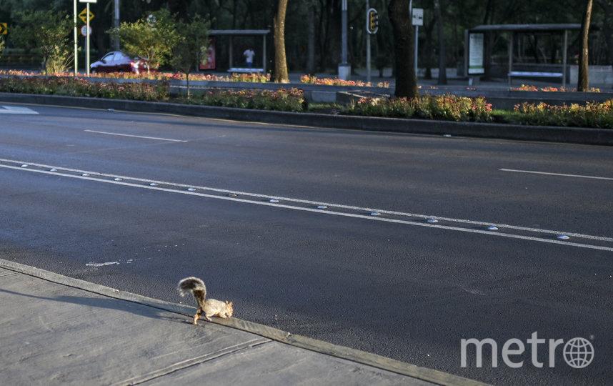 Белка в Мехико. Фото AFP