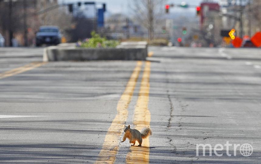 Белка посередине дороги в Солт-Лейк-Сити. Фото AFP