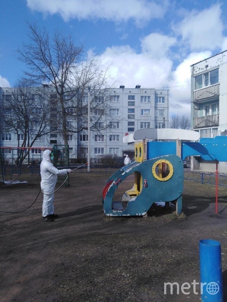 Обработка в Ленинградской области. Фото lenobl.ru