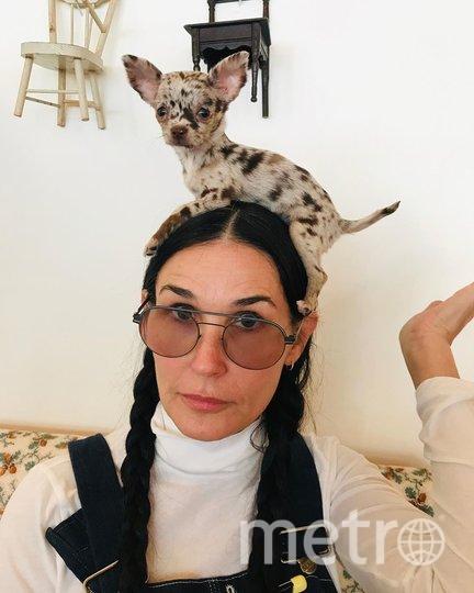 Деми Мур со своей собакой. Фото instagram.com/demimoore.