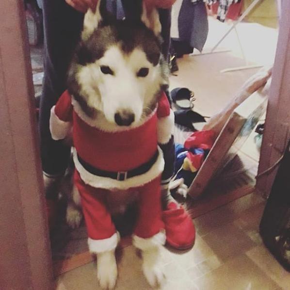 Темерлану ну уж очень понравился его новогодний костюм. Фото Валерия, instagram.com/irynya_nazarova/