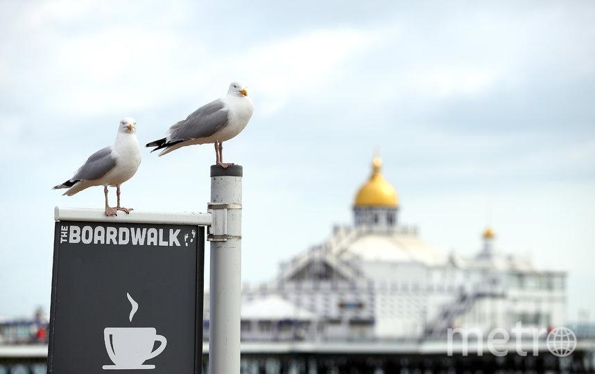 Чайки в Великобритании. Фото Getty