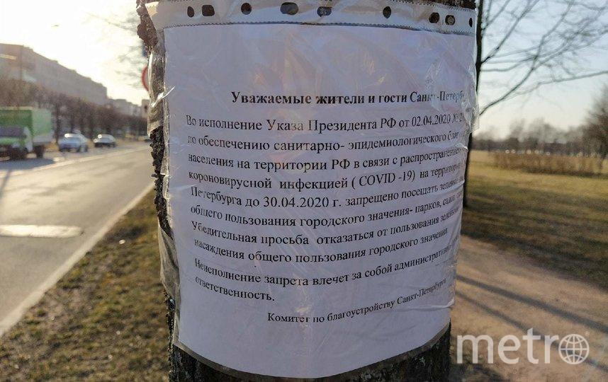 "Так выглядит Петергоф на карантине. Фото Евгения Назарова, ""Metro"""