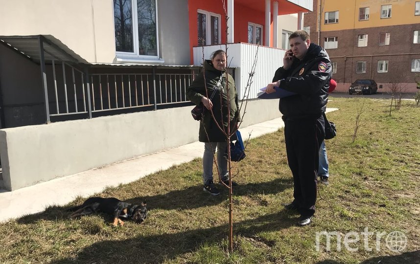 Пес не выжил после падения с 3 этажа. Фото spb_today_unpublished, vk.com