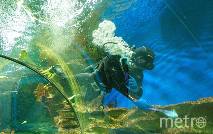"""Как живёт на карантине петербургский океанариум. Фото Алена Бобрович, """"Metro"""""""
