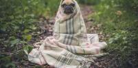 В Узбекистане ограничили выгул собак в связи с коронавирусом