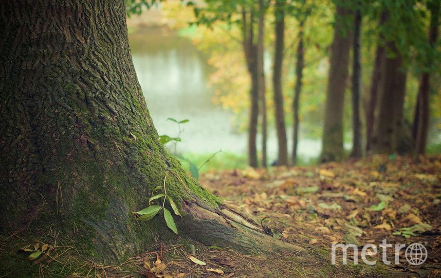 Быстро найти семью помогли лесничие. Фото Pixabay