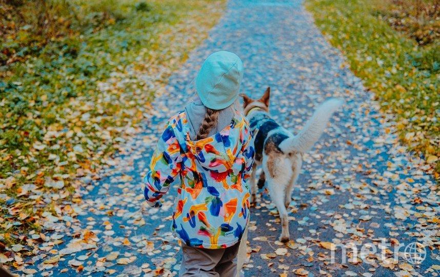 """Собаки страдают без долгих прогулок с волонтерами. Фото Дарья Кашина, """"Metro"""""""
