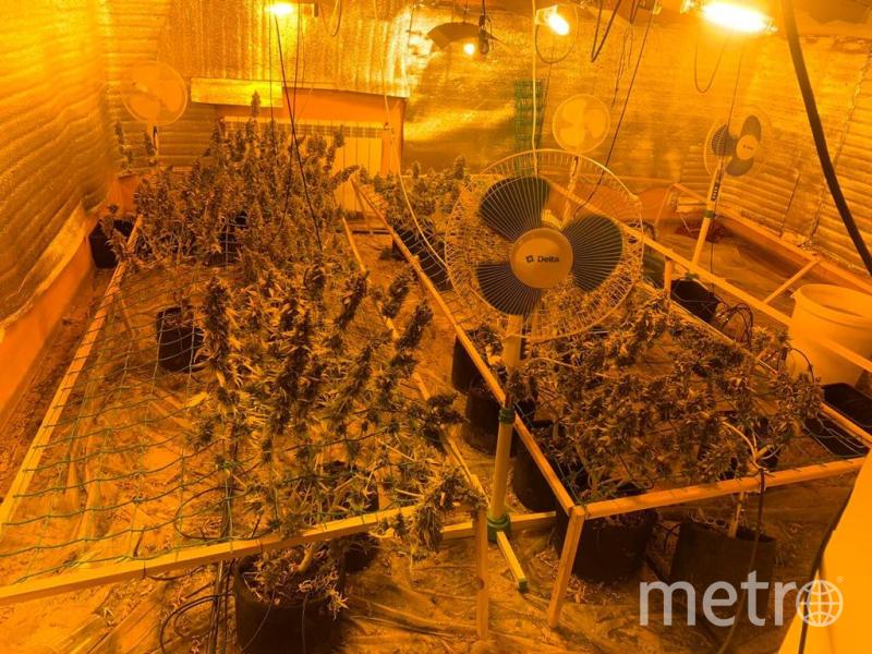 Плантацию обнаружили во Всеволожском районе. Фото МВД РФ по СПб и ЛО