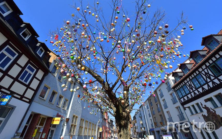 Яичное дерево. Фото Getty