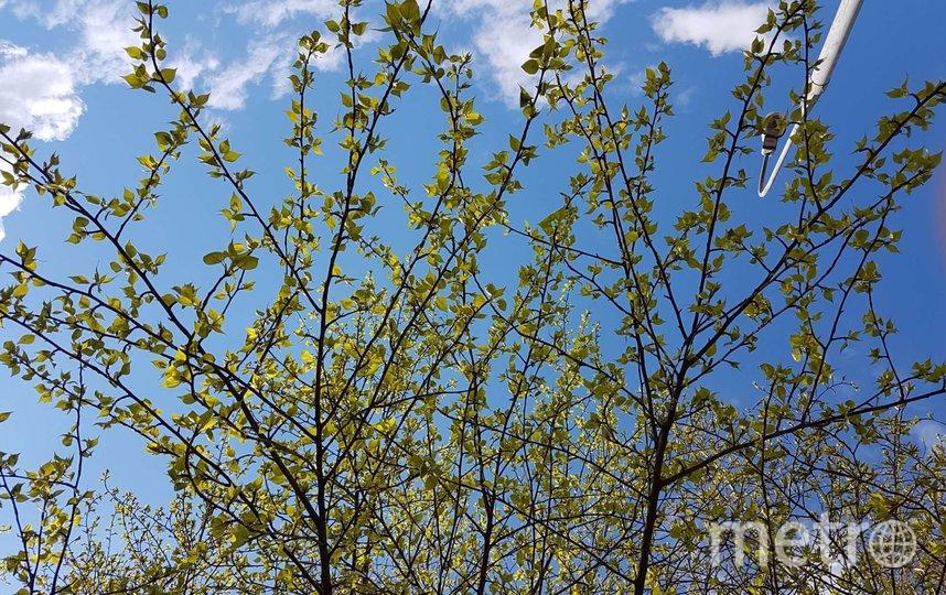 Весна приходит в Москву. Фото Василий Кузьмичёнок