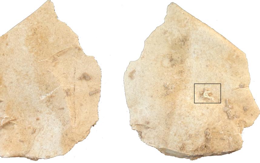 Международная группа исследователей обнаружила кусок древней нити, сделанной неандертальцами. Фото M.-H. Moncel