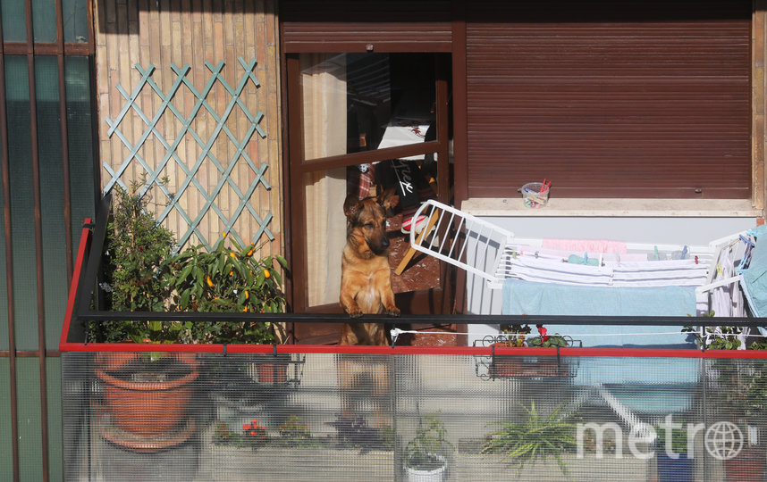 В Риме выгуливают на балконе собак. Фото Getty