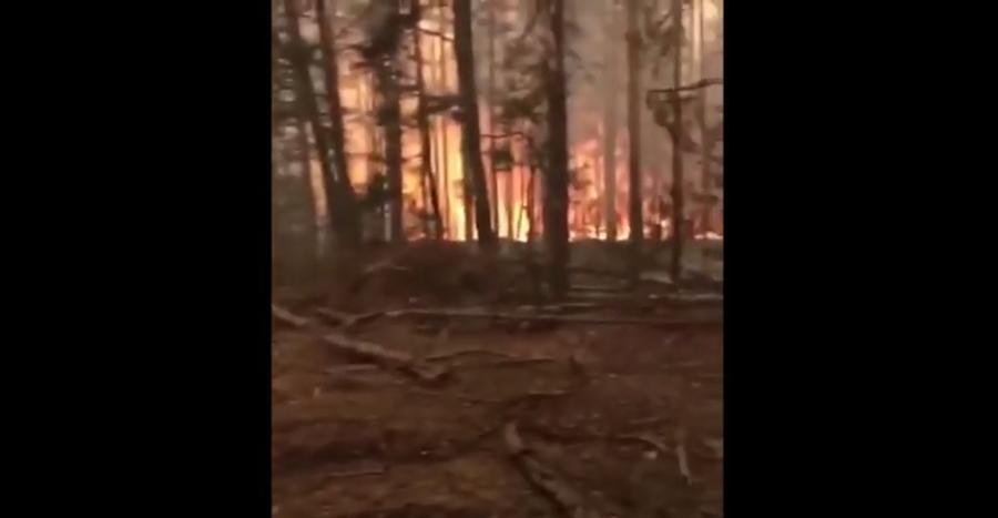 Пожар, Чернобыль, 2020 год. Фото Скриншот Youtube/watch?v=Ed3eNOwAuxo