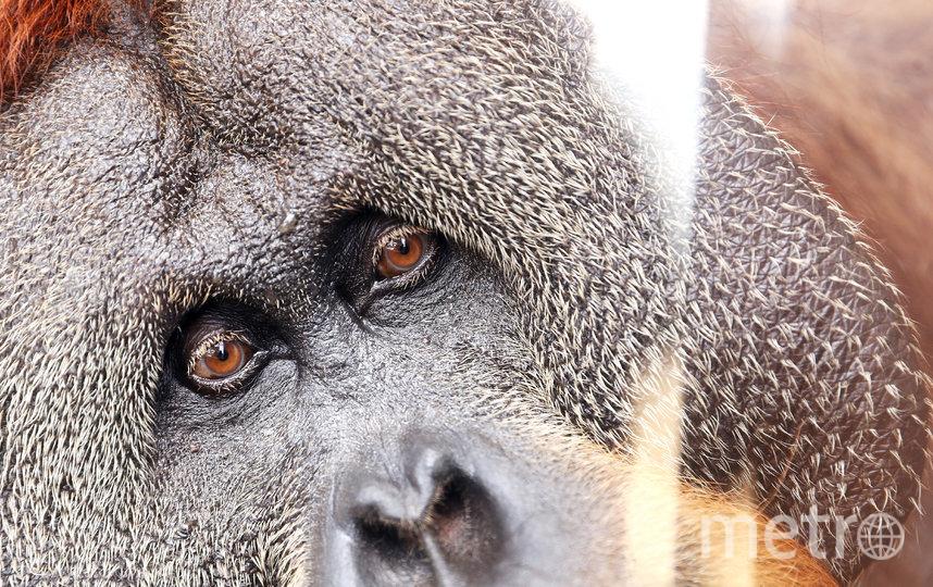 Животные в зоопарках скучают по посетителям. Фото Getty