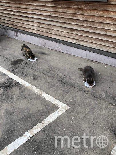 Животным в эпоху коронавируса приходится непросто. Фото предоставлено Мосгорпарком