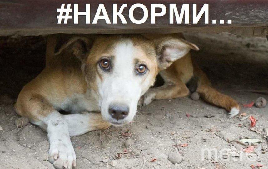 """Для помощи временно осиротевшим кошкам и собакам волонтёры-зооактивисты запустили движение """"#НАКОРМИ"""". Фото страничка движения """"#НАКОРМИ"""" в Facebook"""