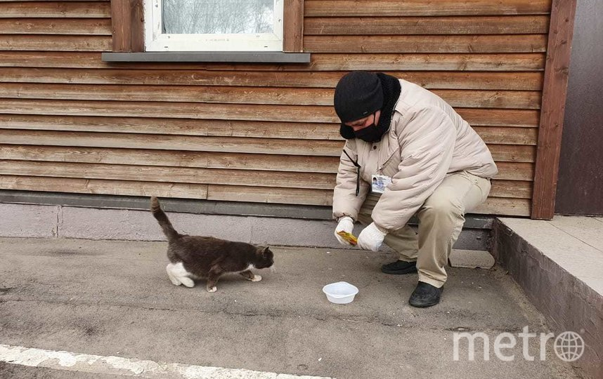 """Охранник парка """"Кузьминки"""" кормит местных кошек. Фото предоставлено Мосгорпарком"""