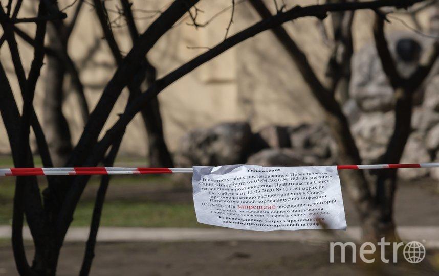 """Сакура на Литейном. Фото Алена Бобрович, """"Metro"""""""