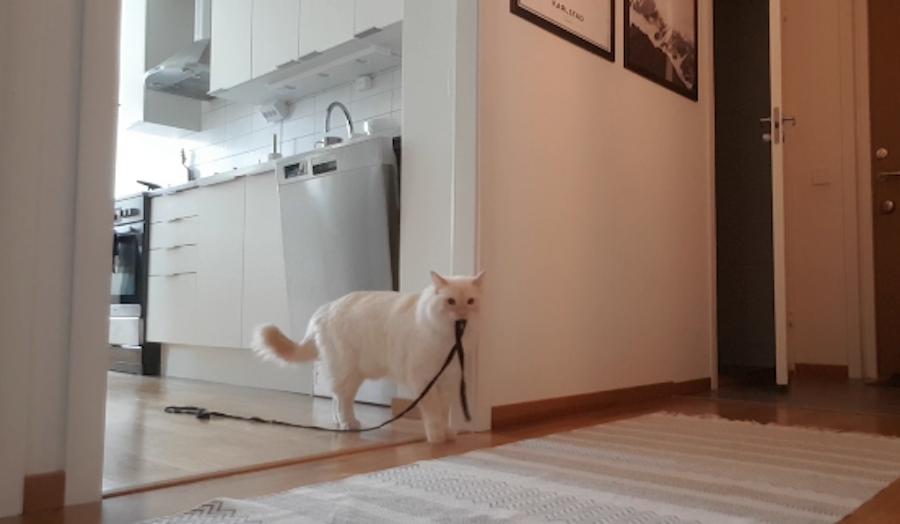 """Скрытая камера сняла """"тайную жизнь"""" оставшегося в одиночестве кота. Фото скриншот reddit.com"""