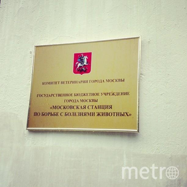 Государственная зоогостиница Мосветстации находится в Савёловском районе столицы. Фото Instagram @ddshkolata