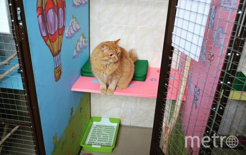 Москвичи с коронавирусом могут бесплатно пристроить кошек и собак в зоогостиницу Мосветстанции. Фото Instagram @vetsvao