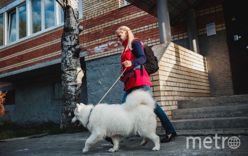 С вашей собакой погуляют даже на карантине – важно, кто именно. Фото Instagram