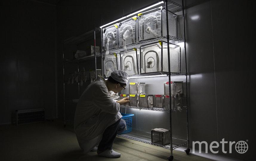 Американский телеканал Fox News со ссылкой на источники сообщил, что коронавирус нового типа COVID-19 возник в уханьской лаборатории. Фото Getty