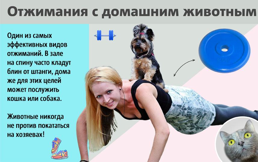 """Пёс вам в помощь! Фото Сергей Лебедев, """"Metro"""""""