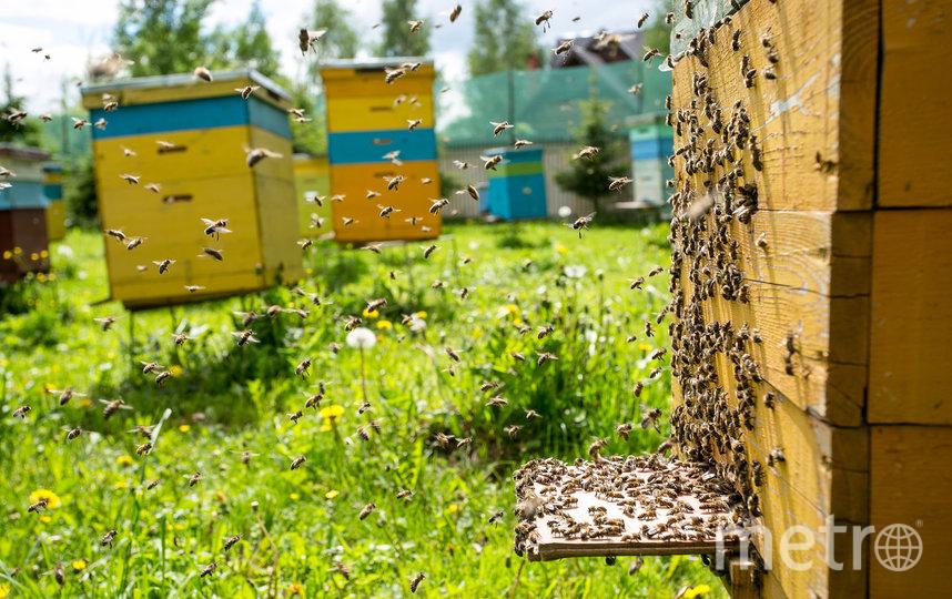 """Разводить пчёл –непростое дело. Фото http://hortus.ru/, """"Metro"""""""