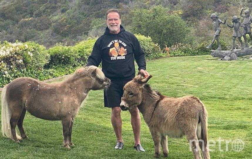 Арнольд Шварценеггер с питомцами. Фото instagram.com/schwarzenegger.