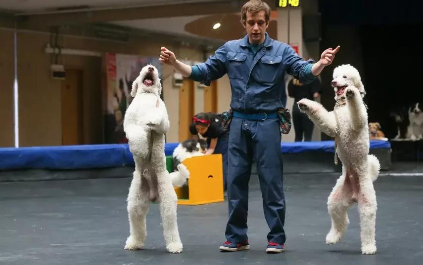 У собак программа сейчас тоже невероятно насыщенная. Фото Василий Кузьмичёнок