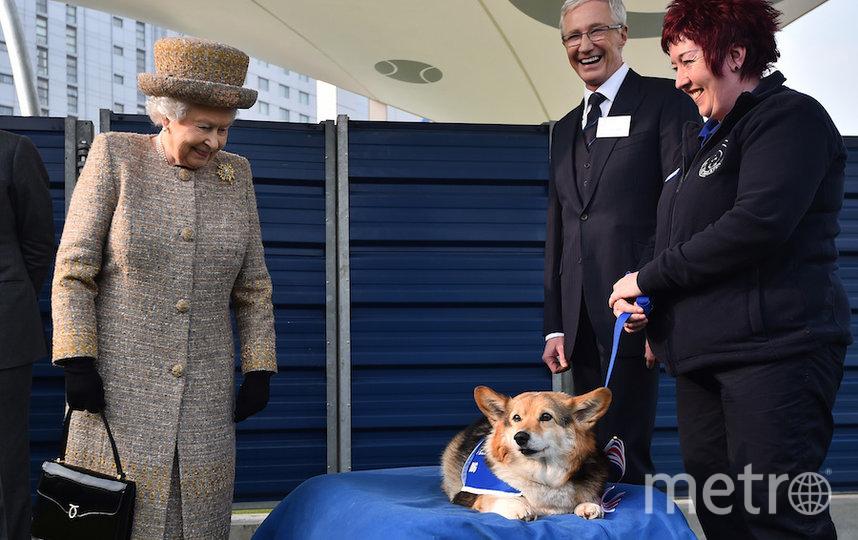 Королева Елизавета II очень любит собак. Фото Getty