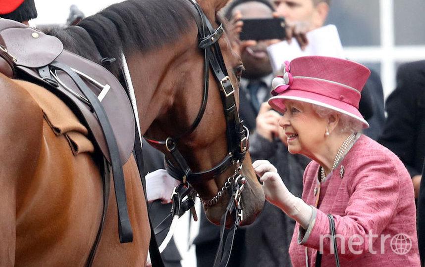 Королева Елизавета II также любит лошадей и была хорошим наездником. Фото Getty