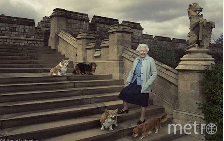 Королева Елизавета II и её корги. Фото Instagram @theroyalfamily
