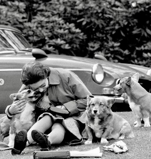 Королева Елизавета II очень любит собак. Фото Instagram @theroyalfamily