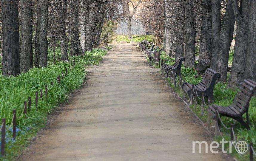 Пока сад закрыт для посещения. Фото Василий Кузьмичёнок