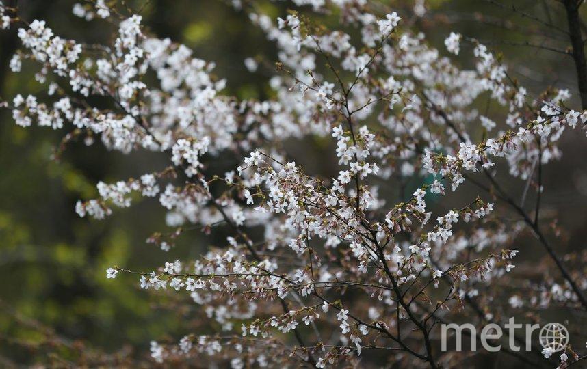 Приближение весны чувствуется во всём. Фото Василий Кузьмичёнок
