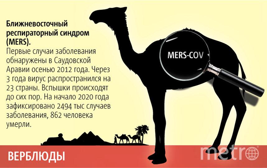 """Животные уже заражали людей опасными болезнями. Фото Павел Киреев, """"Metro"""""""