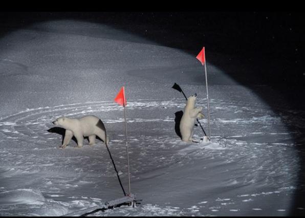 """1-е место в категории """"Окружающая среда"""". Эстер Хорват. Белый медведь и детёныш изучают оборудование, оставленное учёными немецкого научно-исследовательского судна """"Полярная звезда"""". Фото Instagram World Press Photo"""