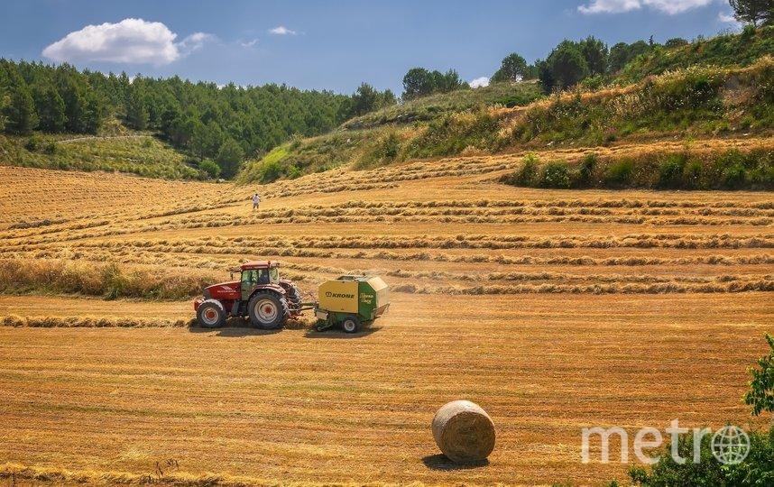 Студентов в Приморье отправят на полевые работы. Фото pixabay.com