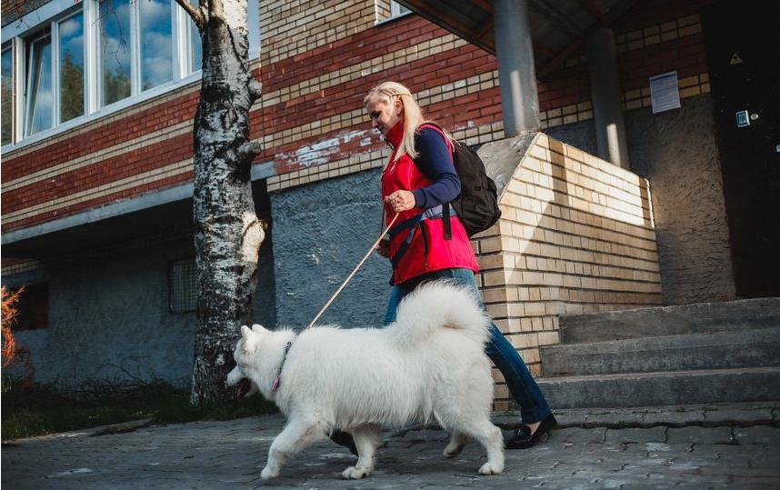 С крупными собаками гуляют особые зооволонтеры – специалисты кинологических ассоциаций. Фото Instagram