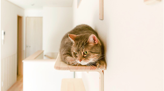 Кошкам нравится сидеть на полках.