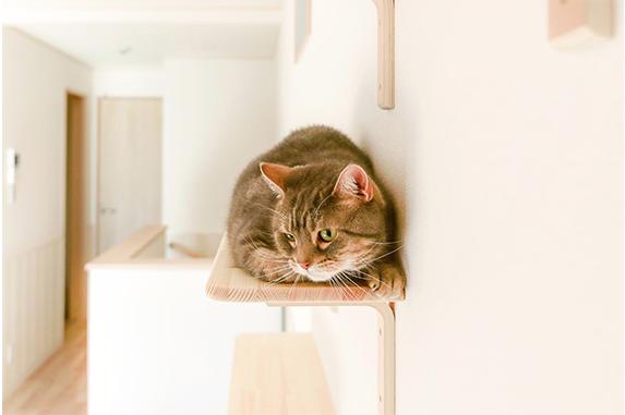 """Кошкам нравится сидеть на полках. Фото https://www.nekobu.com/, """"Metro"""""""