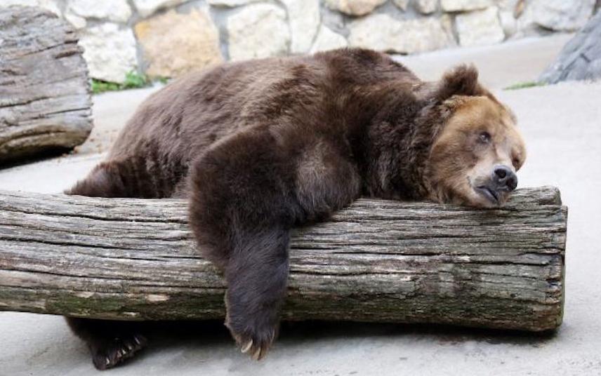 В будущем не исключено появление медведей в тех местах, где раньше они не водились. Фото mos.ru