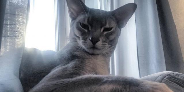 Кот музыканта – Винсент.