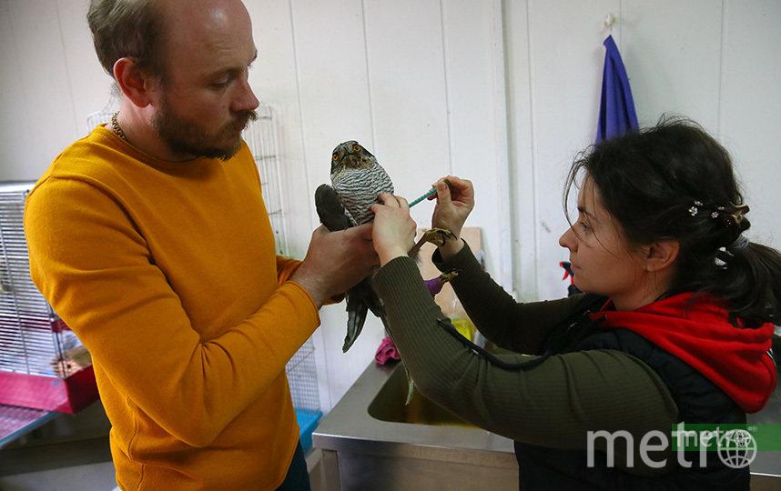 Денис и Таня лечат ястреба-тетеревятника. У него сломано крыло и повреждена лапа. Фото Василий Кузьмичёнок