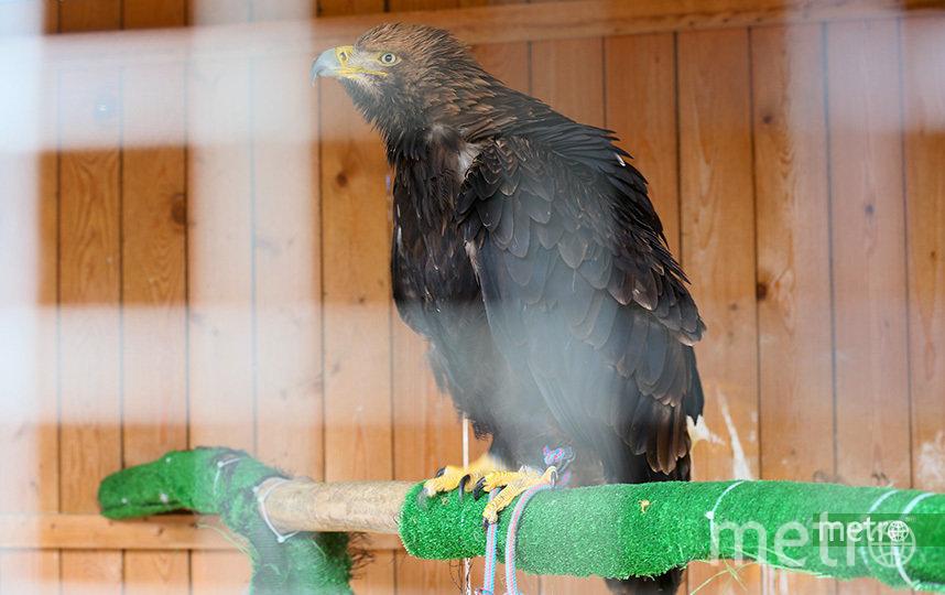Этого орла изъяли у фотографа. Фото Василий Кузьмичёнок